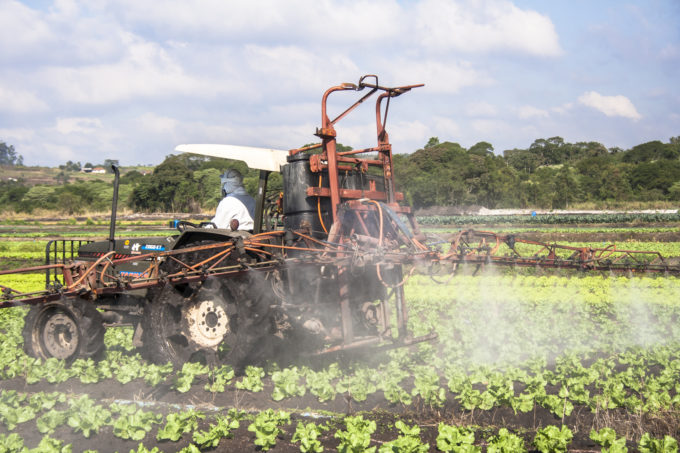 Mogi das Cruzes, Sao Paulo, Brazil, July 01, 2009. Farmer spraying lettuce crops field with tractor and sprayer in Sao Paulo state