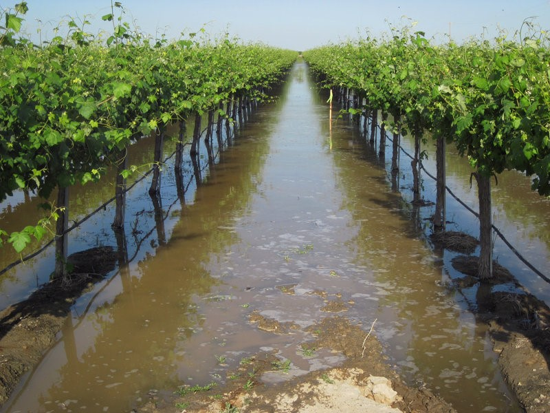 Flooded vineyard-Ag Today